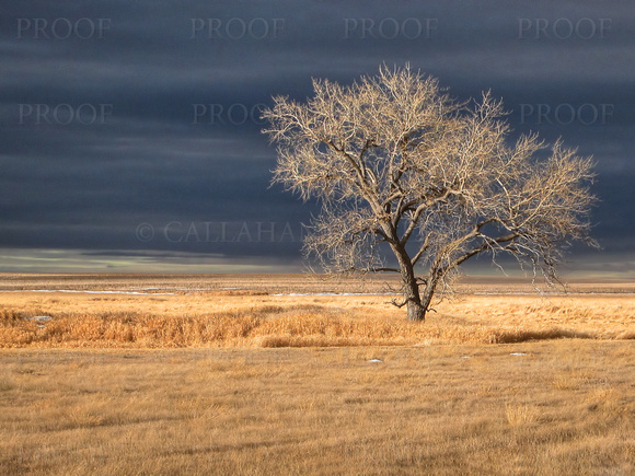 Alone on the Prairie